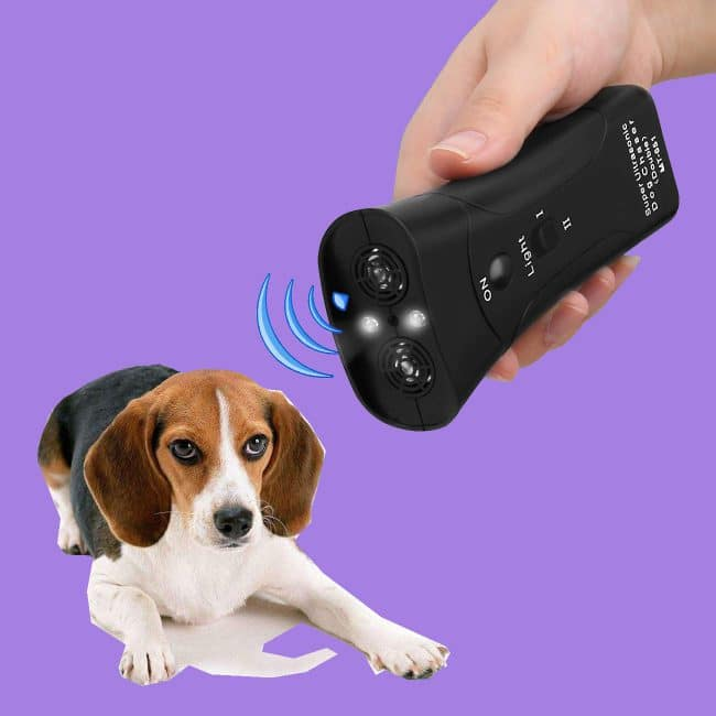 dog training gadget