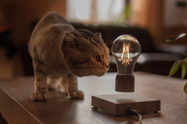 Floately bulb pet friendly
