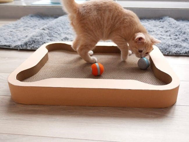 Robot for Cat