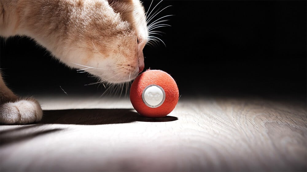 Cat robot toy