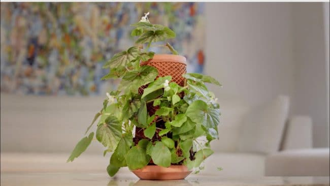 terraplanter inside out garden