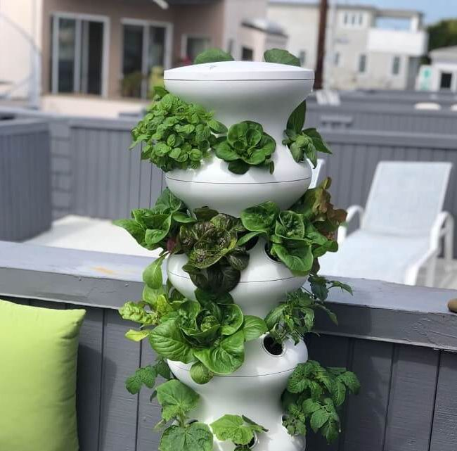 lettuce grow farmstand